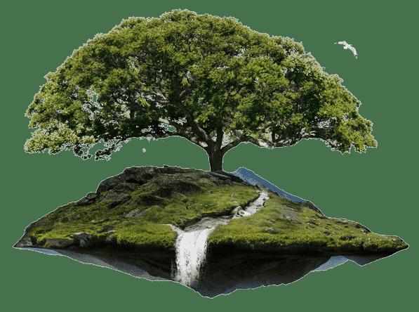 L'Arbre Blanc | Physiothérapie, Réflexologie, huiles essentielles